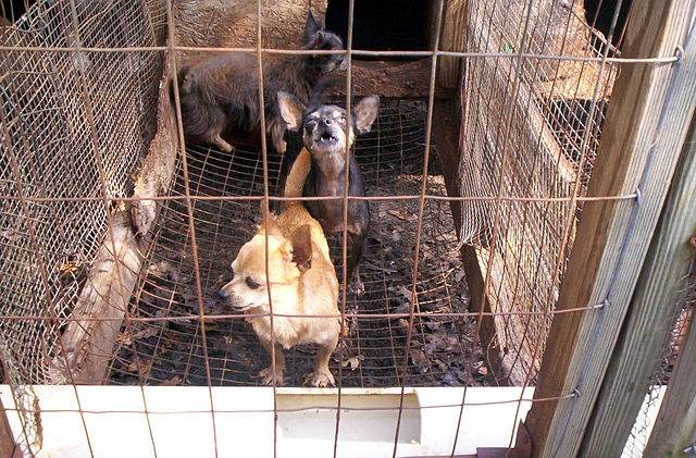 Photo of a Puppy Mill in the Public Domain