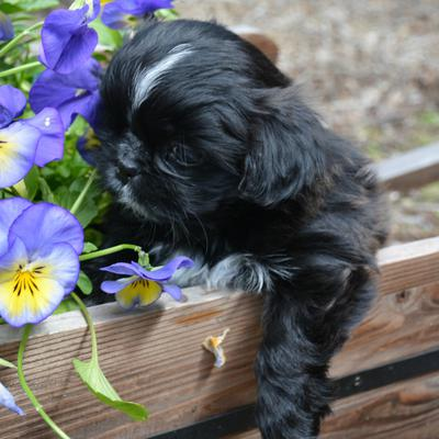 I've taken the liberty to add some previous puppies to this post.  This is Winnie, Bebe's puppy