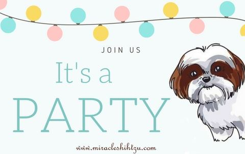 Shih Tzu Puppy Shower
