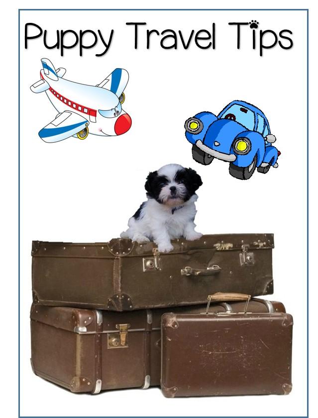 Puppy Travel Tips