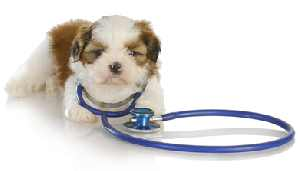 Puppy with a stethoscope
