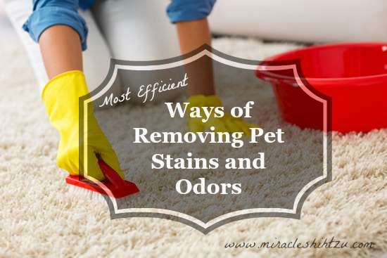 Most Efficient Ways of Removing Pet Stains and Odors  Header Image