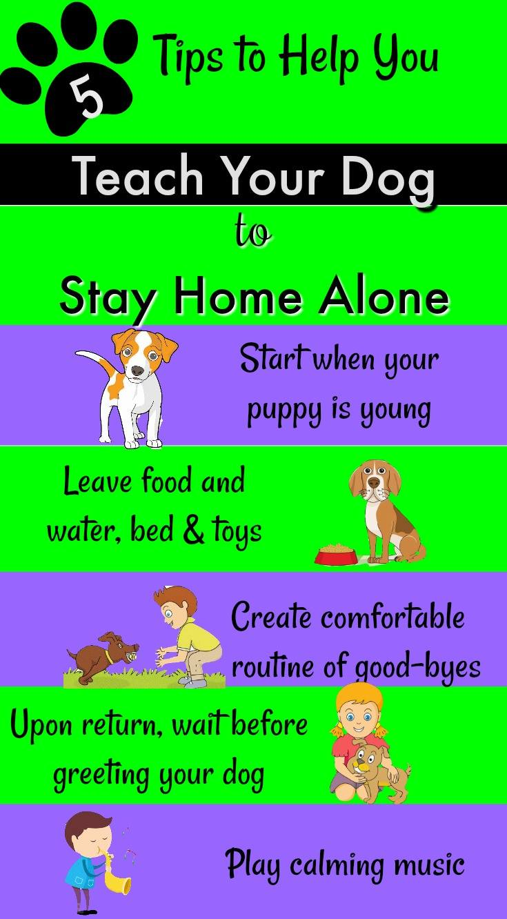 5 Tips to Teach Your Dog to Stay Home Alone