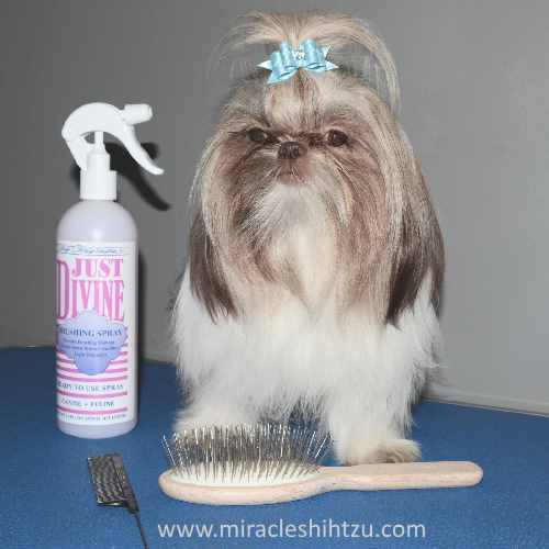 Shih Tzu Bows Descriptions Reviews How To With Photos