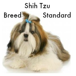 Shih Tzu Breed Standard Link