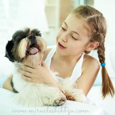 Shih Tzu Dogs are Good with Children