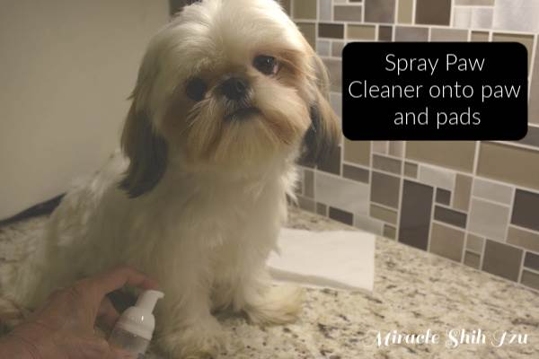 Clean Shih Tzu pads with spray paw cleaner