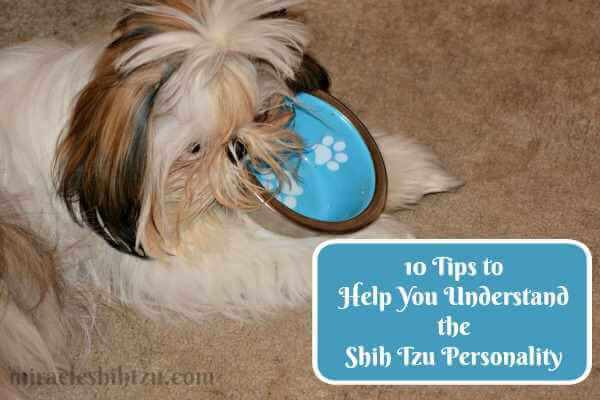 The true personality of the Shih Tzu Dog