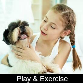 Shih Tzu Play and Exercise