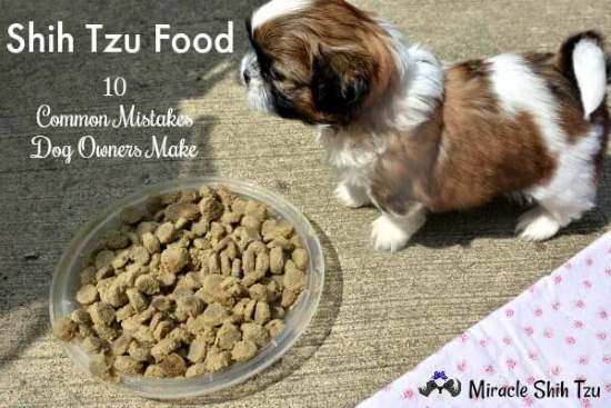 Shih Tzu Food:  10 Common Mistakes Dog Owners Make