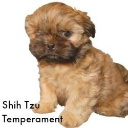 Shih Tzu Temperament Link