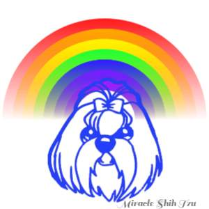 Shih Tzu clip art face below a colorful rainbow