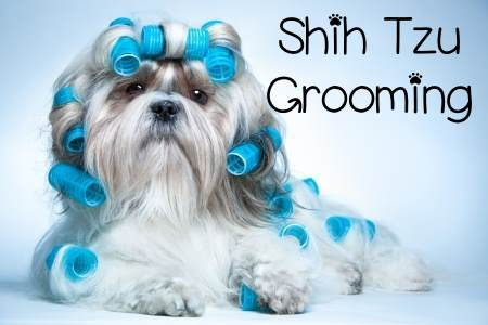 Pleasing Grooming The Shih Tzu An Overview Hairstyles For Men Maxibearus