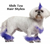 Grooming the Shih Tzu: An Overview
