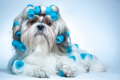 Shih Tzu Grooming Supplies