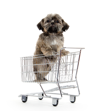 Shopping for your new puppy
