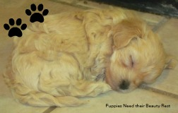 Puppies need plenty of sleep for their well-being