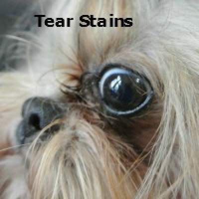 Tear Stains