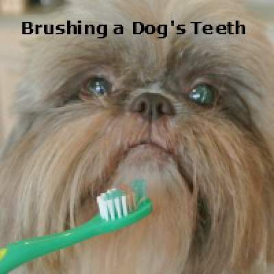 Brushing Dog's Teeth