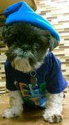 Huey's Adoption Story