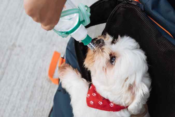 Using a Dog Water Bottle: How To