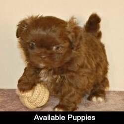Bebe as a puppy