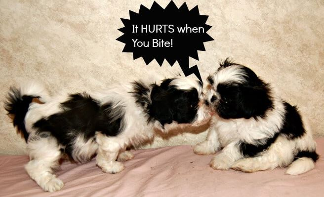 Puppy Biting hurts.