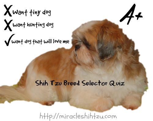 Breed Selector Quiz