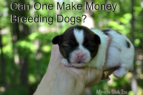 Can you make money breeding dogs?