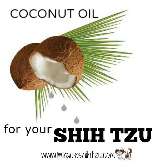 Coconut Oil for Shih Tzu