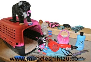 Puppy Possessions