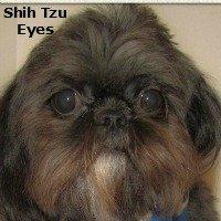Shih Tzu Eye Care