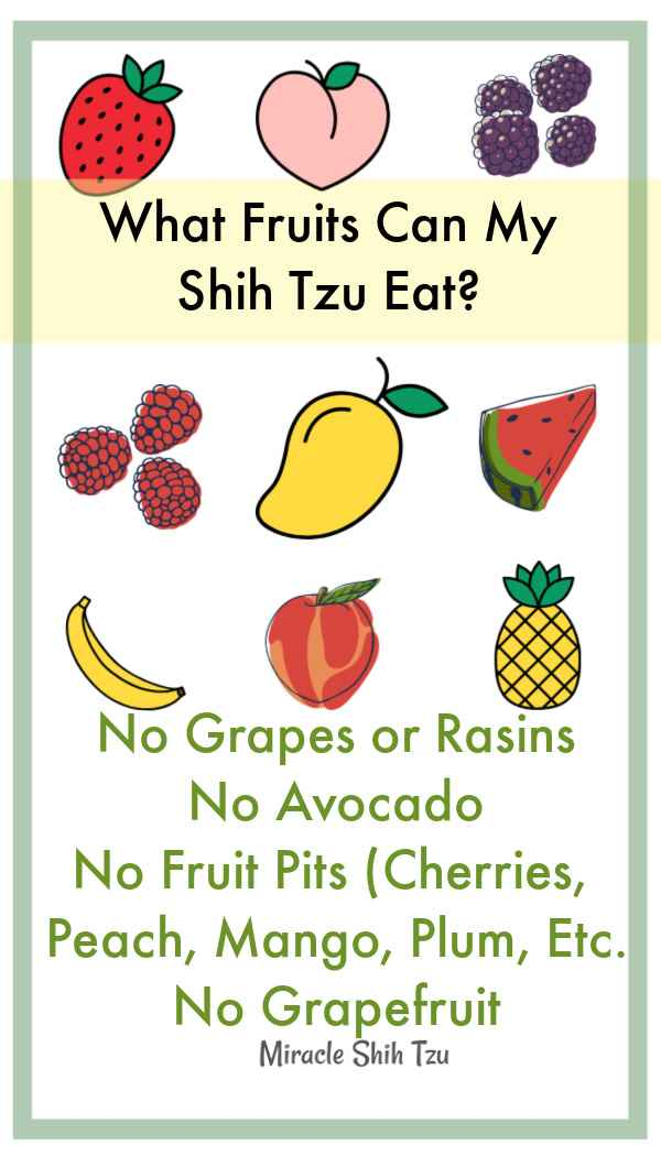 Fruits and Vegetables for a Shih Tzu