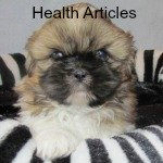 Shih Tzu Health Articles