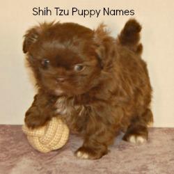 Shih Tzu Puppy Names