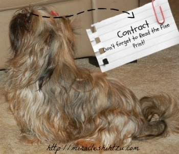 Miracle Shih Tzu Purchase Contract