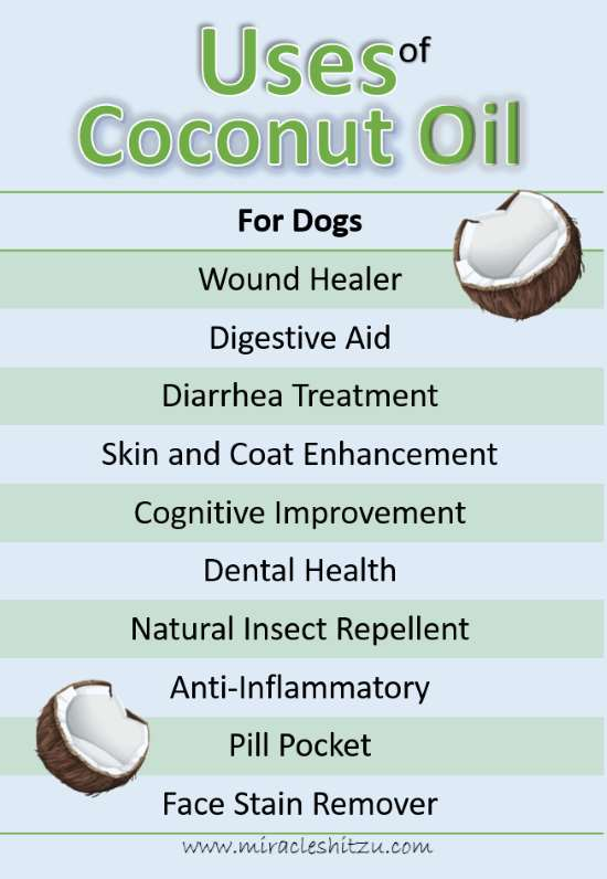 Uses of Coconut Oil in Dogs, Infographic
