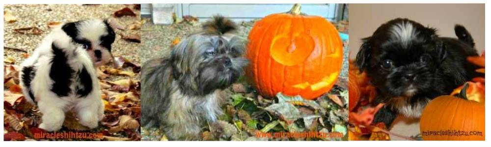 Autumn in the U.S. means that Halloween is right around the corner. Choose a great dog costume for your pup.