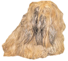 Shih Tzu Facts: Double Coated Breed