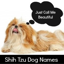 Shih Tzu Dog Names