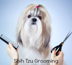 Brushing and Combing the Shih Tzu