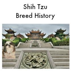Shih Tzu Breed History Link