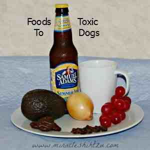 Foods toxic to dogs link