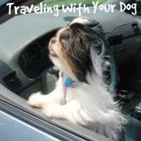 Shih Tzu Facts:  How to travel with a dog