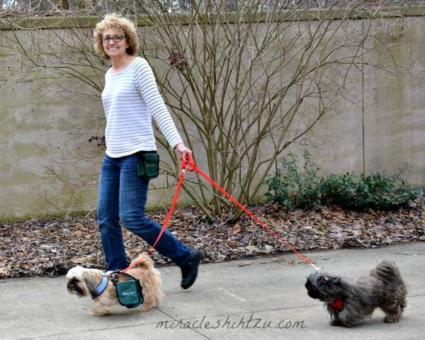 Hiking with A Shih Tzu:  Preparation Tips